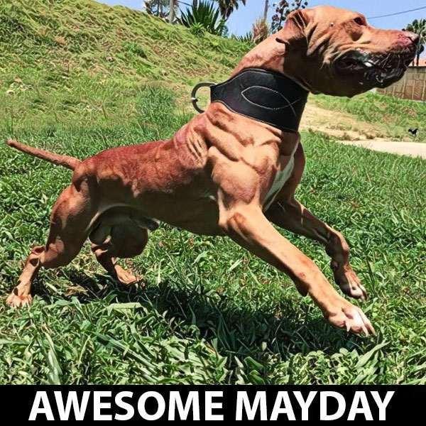 awesome-mayday-chico-lopez