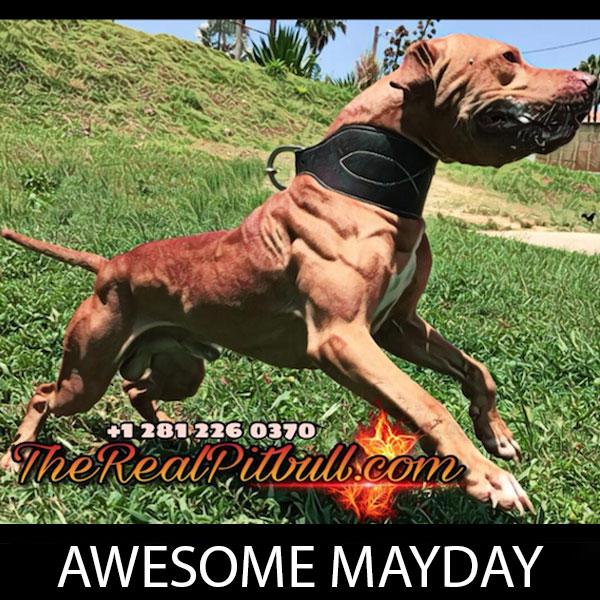 awesome-mayday