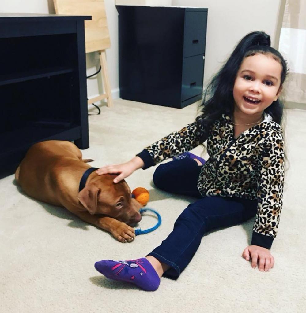 """The Best Pitbull Puppies"""