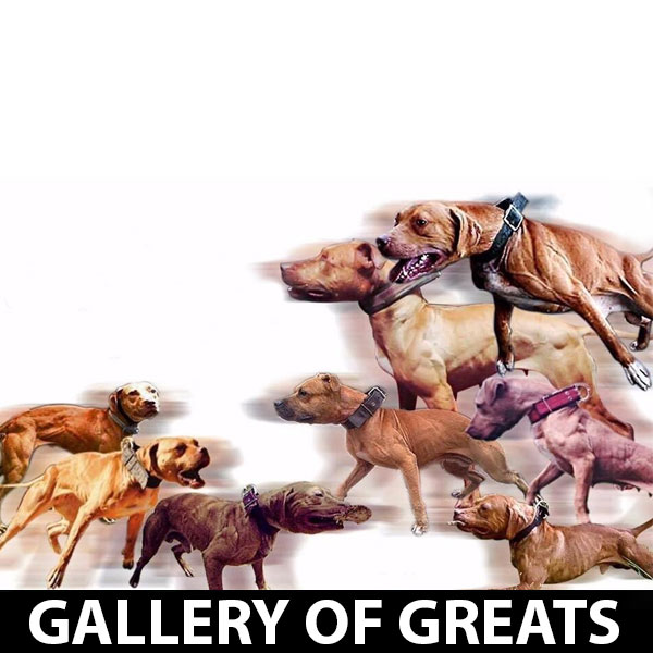 gallery-of-greats