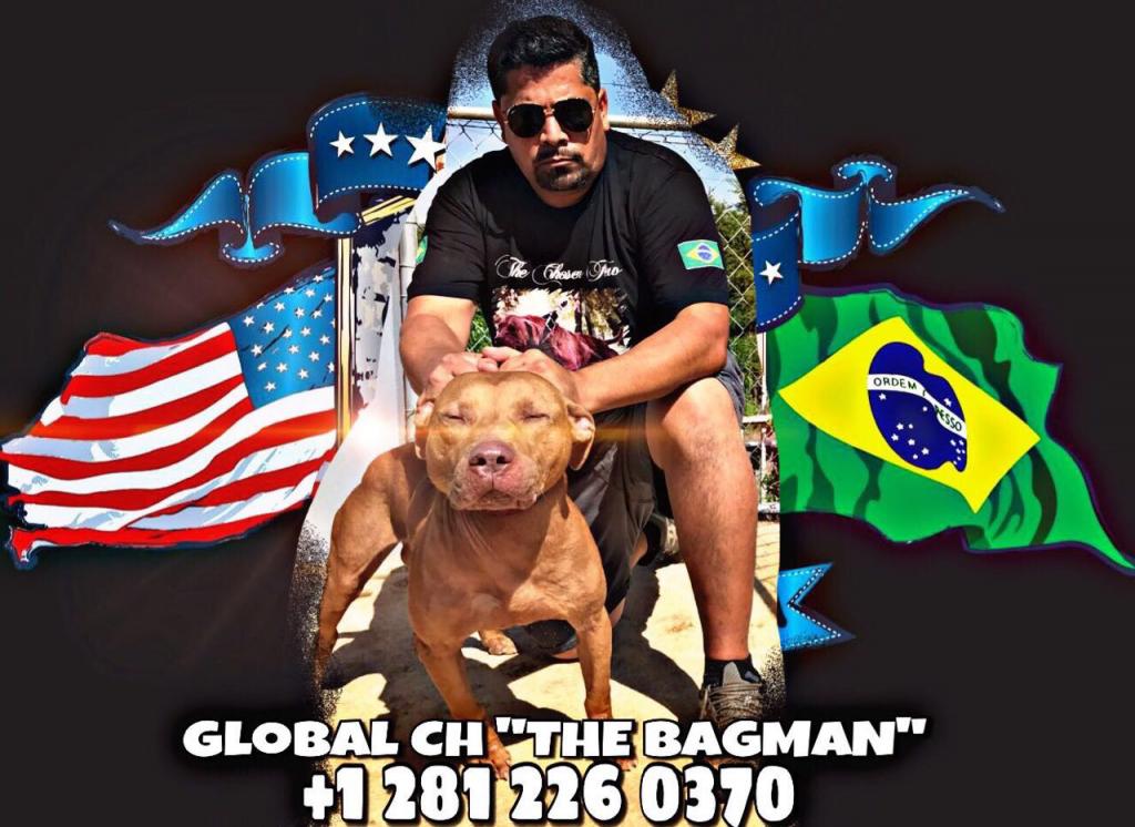 global-ch-the-bagman1