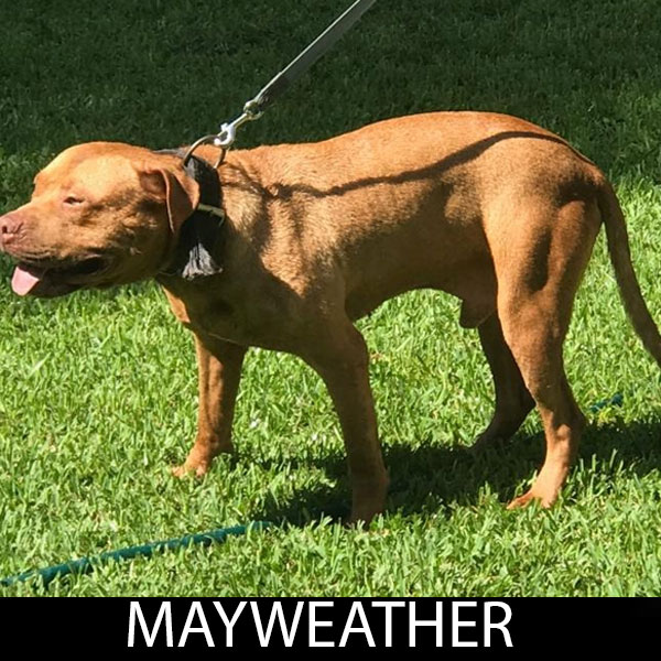 mayweather2