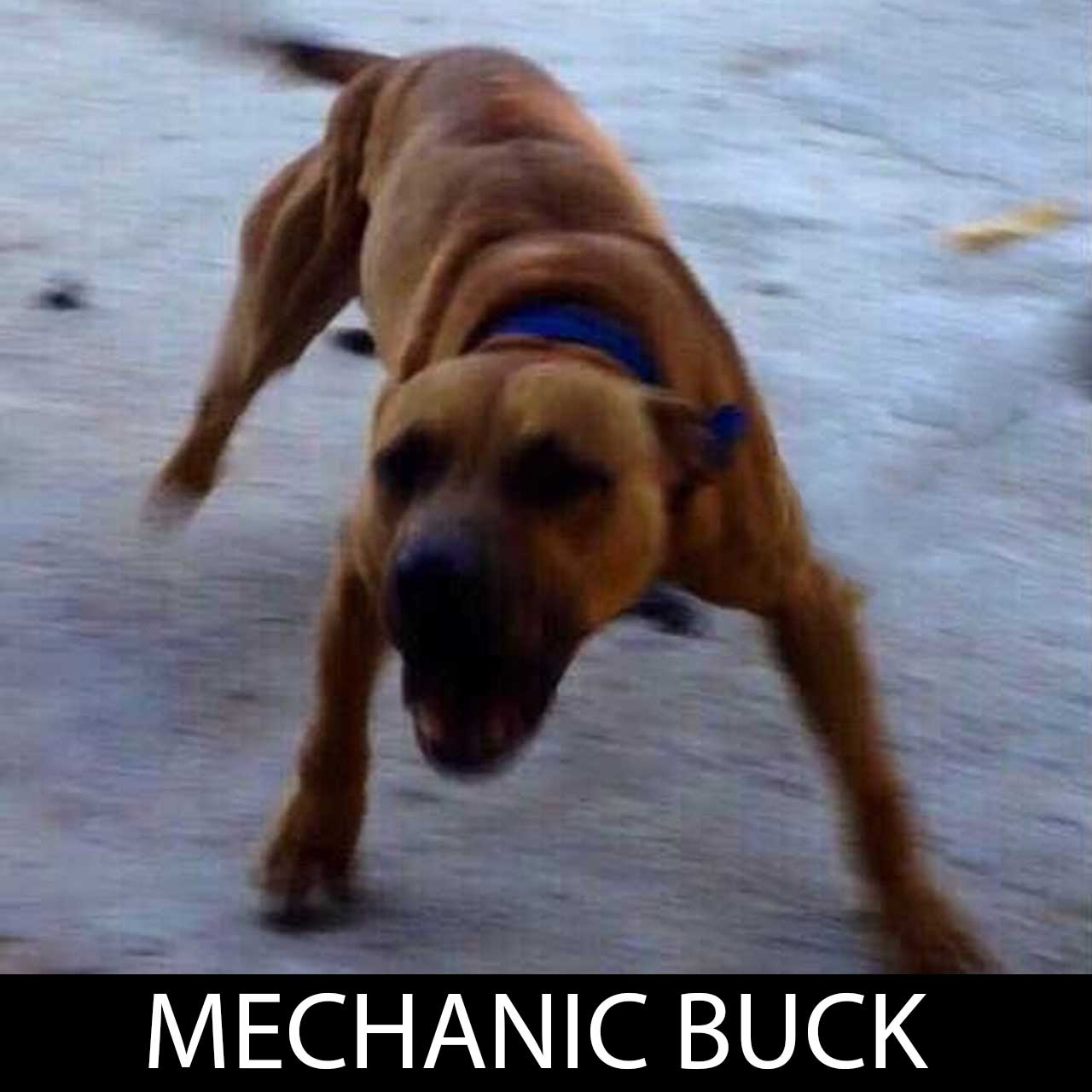 mechanicbuck