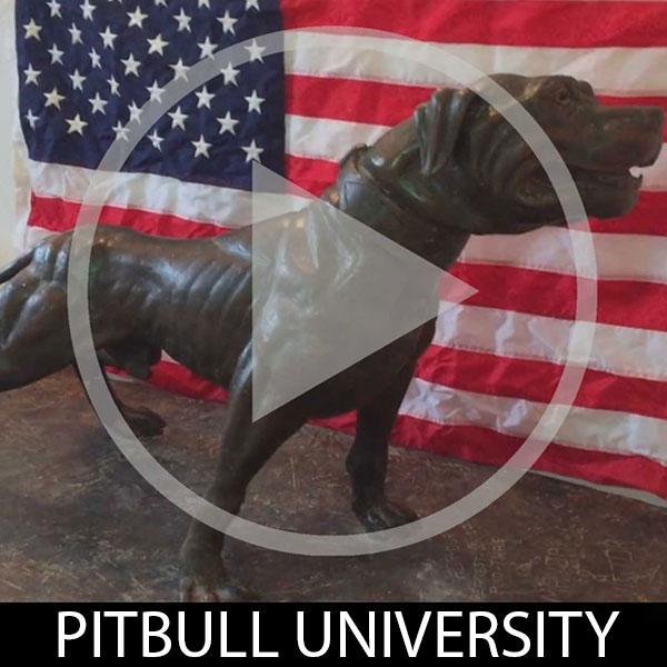pitbull-university