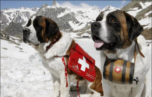 Working dogs in the snow