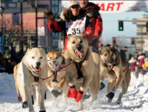 Alaska race