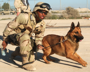 Army working dog