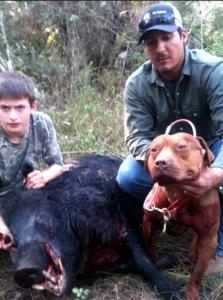 Hog hunting APBT