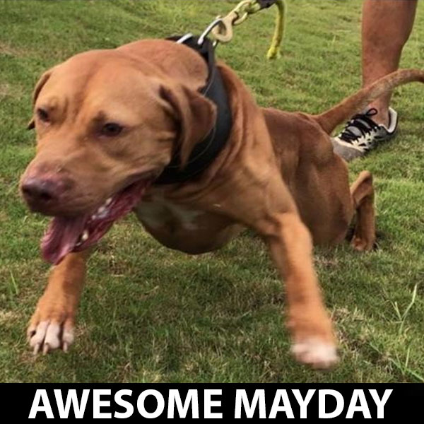 awesome-mayday