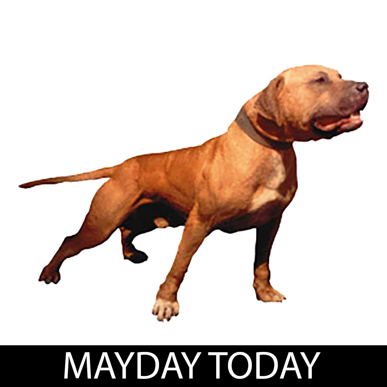 mayday-today