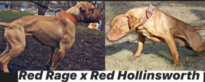red-rage-x-red-hollinsworth