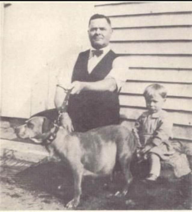 Wanted Culture-Buyers - Pitbull, pitbull puppies,ADBA, APBT