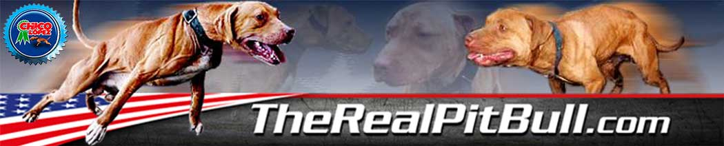 Pitbull, pitbull puppies,ADBA, APBT,Puppies, Gr Ch Mayday,TheRealPitbull.com